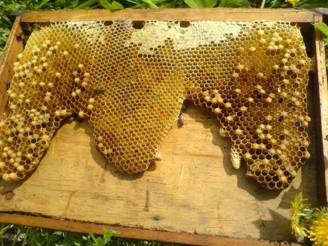 Пчёлы и улей